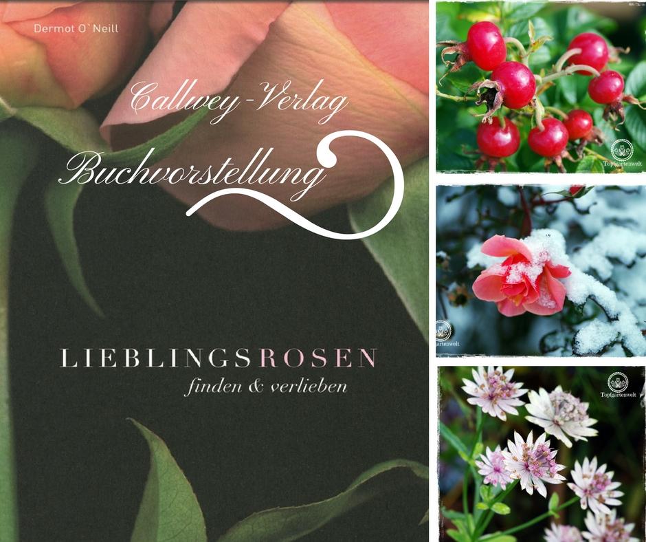 Lieblingsrosen, finden und verlieben – Rosen für den Garten | Rosenbuch!