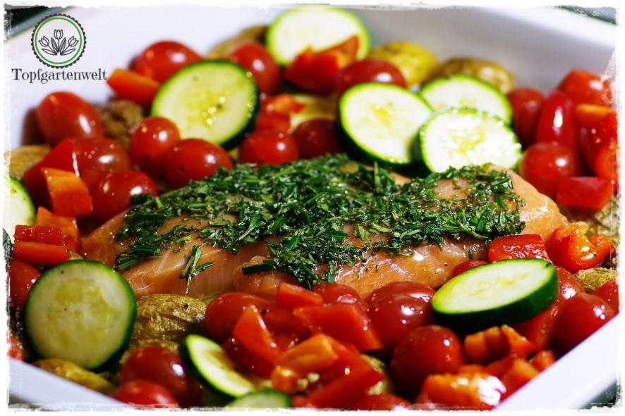 Gartenblog Topfgartenwelt Buchvorstellung Blech-Kochbuch 1 Blech 50 Rezepte: abwechslungsreiche Gerichte für das Backblech