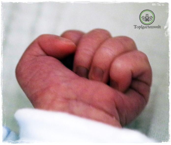 Gartenblog Topfgartenwelt Familie: Wir sind nun zu dritt - warum ein Kaiserschnitt kein Drama bzw. Trauma ist, vom Stillterror im Krankenhaus und die furchtbarsten Bücher zum Thema Schwangerschaft - Hebammensprechstunde, die Alleingeburt