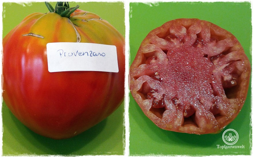 Gartenblog Topfgartenwelt Aussaat Tomatensorten Gartensaison 2018: Tomatensorte Provenzano