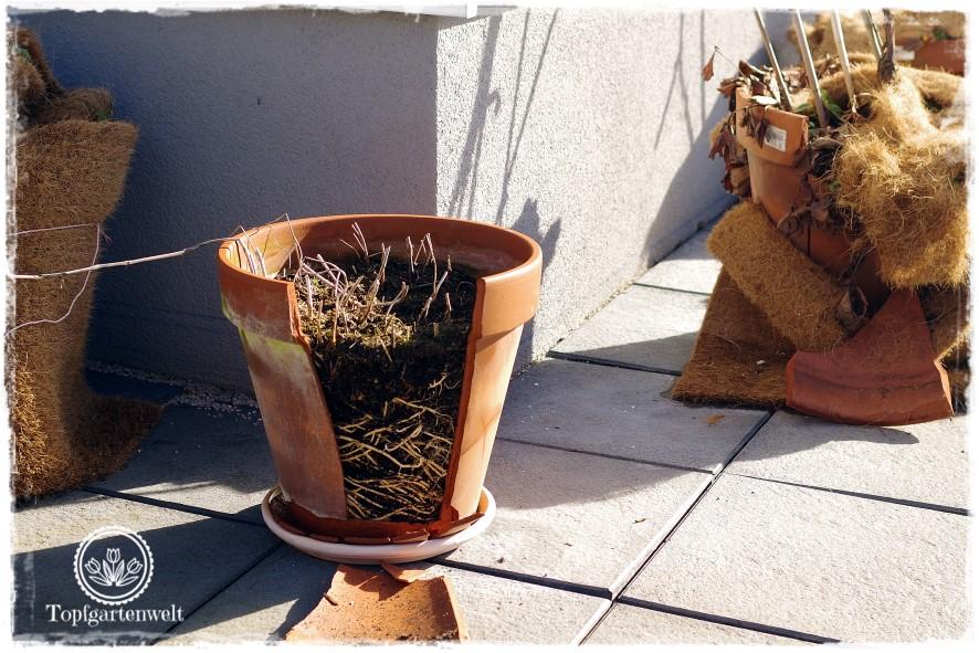 Gartenblog Topfgartenwelt erste Gartenarbeiten im Frühjahr Checkliste: die ersten Gartenarbeiten im Frühling meine Tipps