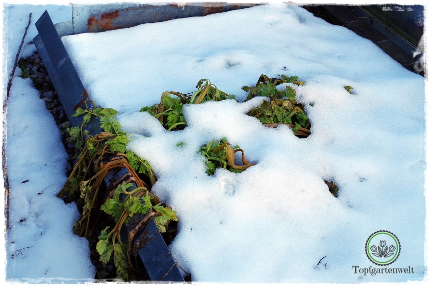 Gartenblog Topfgartenwelt erste Gartenarbeiten im Frühjahr Checkliste: Checkliste für Gartenarbeiten nach dem Winter