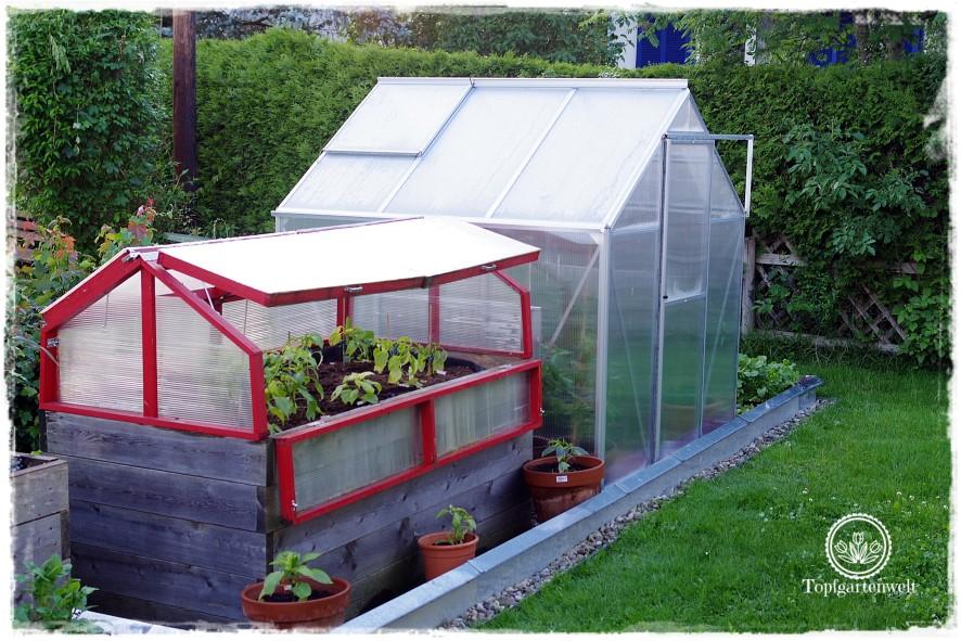 Gartenblog Topfgartenwelt Tomaten Tomatenanbau in großen Töpfen und Trögen: Tomatenerde wiederverwenden