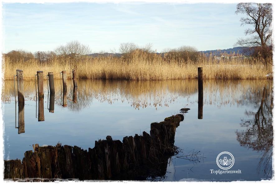 Gartenblog Topfgartenwelt Diana lernt Fotografieren Wallersee im Winter: Buchtipp Fotografieren für Anfänger
