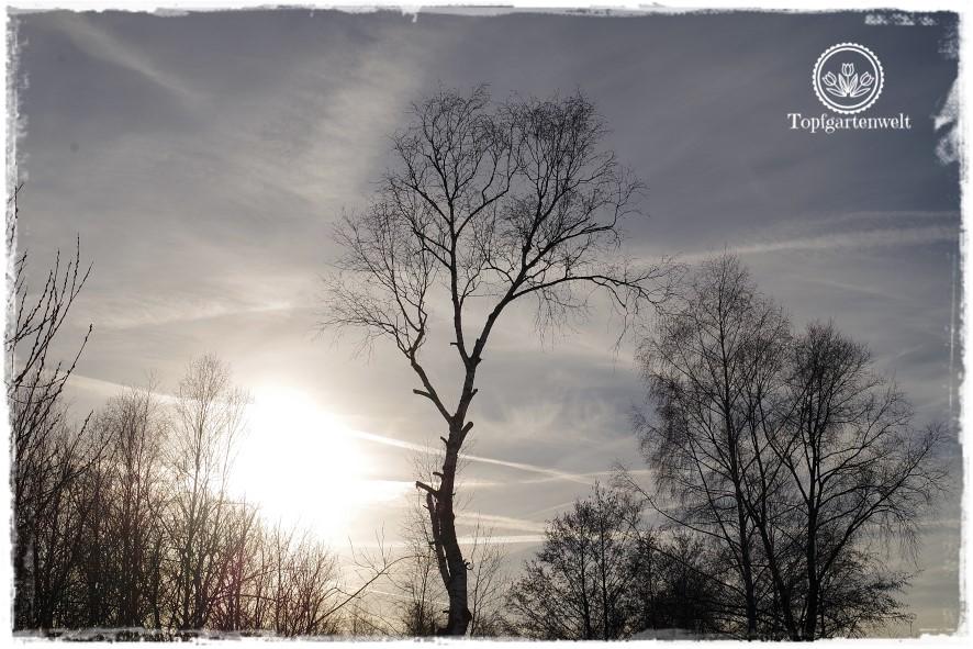 Gartenblog Topfgartenwelt Diana lernt Fotografieren Wallersee im Winter: fotografieren Tipps