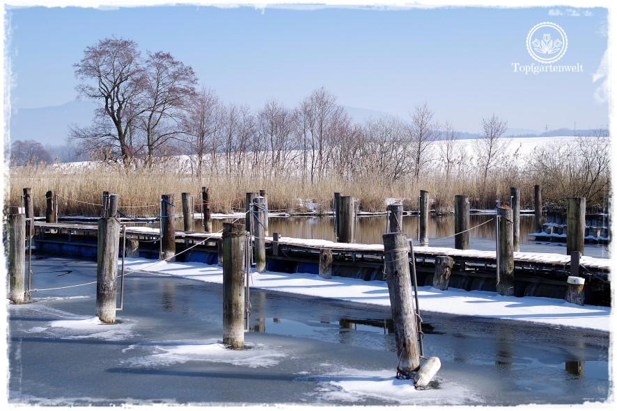 Gartenblog Topfgartenwelt Diana lernt Fotografieren Wallersee im Winter: digitale Fotografie Buch