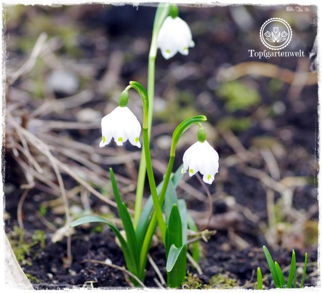 Gartenblog Topfgartenwelt Nachhaltigkeit und Bio im Garten: sind große Konzerne wirklich nachhaltig