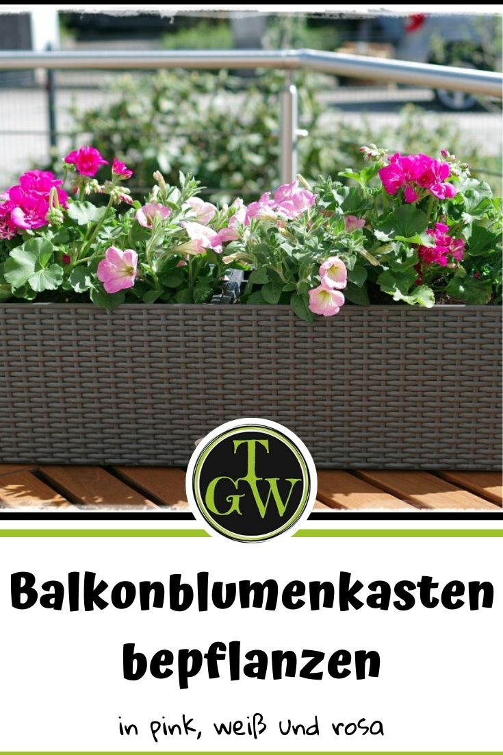 Balkonkästen bepflanzen Beispiele: Balkonblumen - ein Traum in rosa, pink und weiß - Gartenblog Topfgartenwelt #topfgarten #balkonblumen #gartengestaltung #sommerblumen #pelargonien #geranien #surfinien #petunien #verbenen