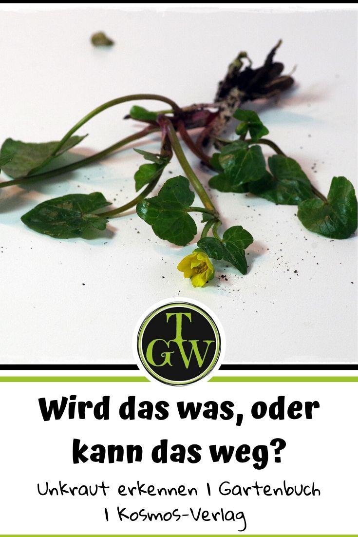 Wird das was oder kann das weg? Unkraut rechtzeitig erkennen - Gartenblog Topfgartenwelt #Buchrezension #Buchvorstellung #Gartenbuch #Unkraut #erkennen #Gartengestaltung #Garten