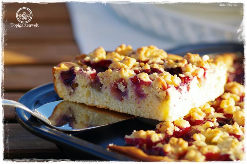 Rhabarberkuchen mit Streuseln und Heidelbeeren - Gartenblog Foodblog Topfgartenwelt