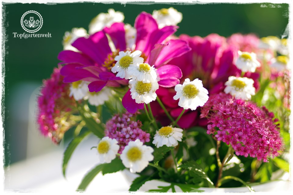Rhabarber-Streuselkuchen mit Heidelbeeren Blumenstrauß im Garten - Gartenblog Foodblog Topfgartenwelt