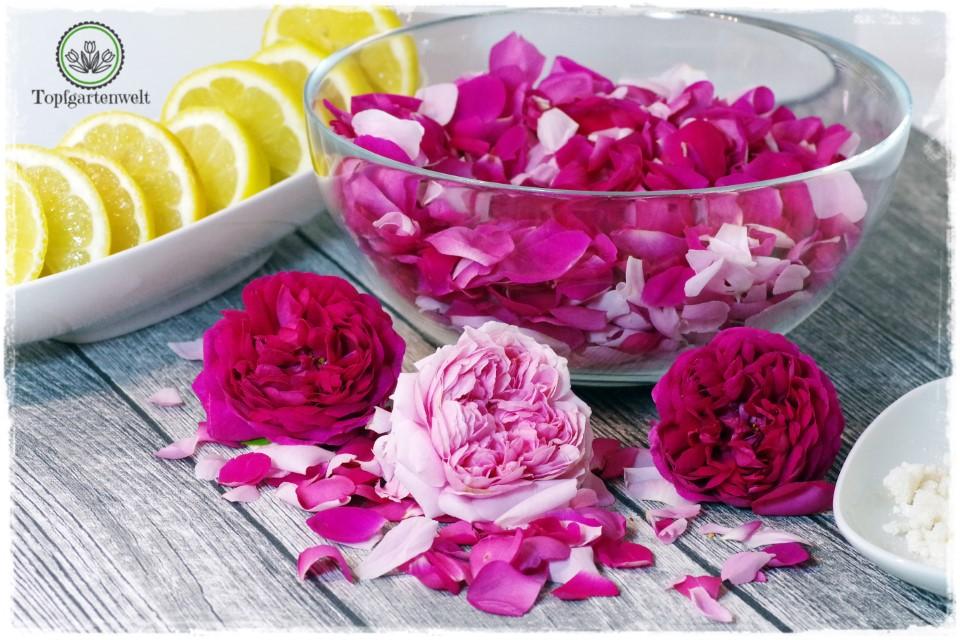 Rosenblütensirup aus Duftrosen selber herstellen!