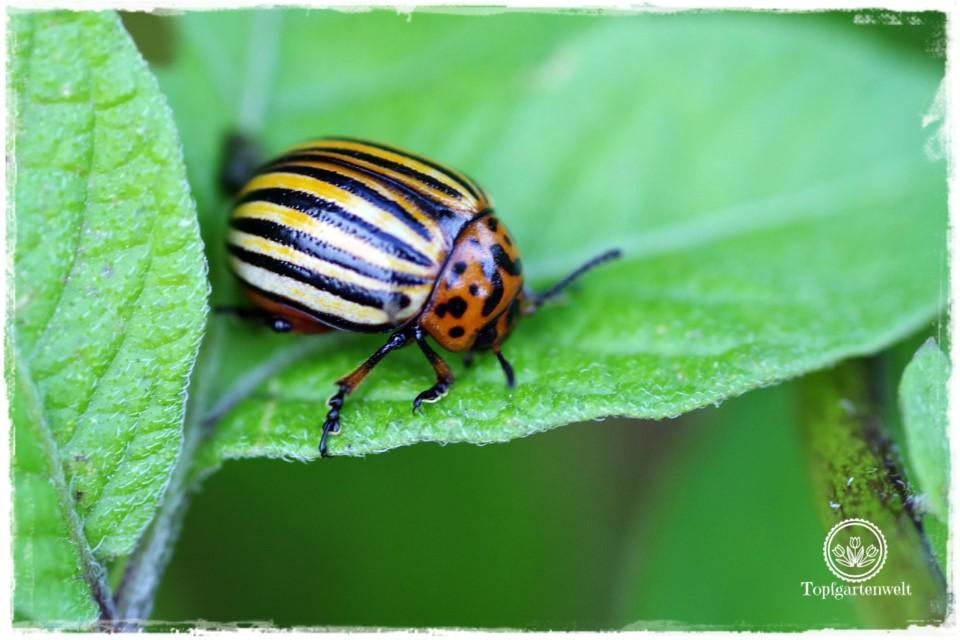 Bist du noch zu retten? Schädlinge und Krankheiten im Garten bestimmen | Gartenbuch!