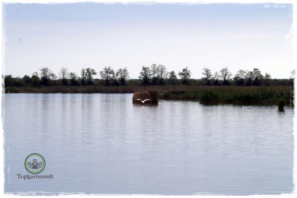 die Kanäle in der Lagune von Caorle - Gartenblog Topfgartenwelt