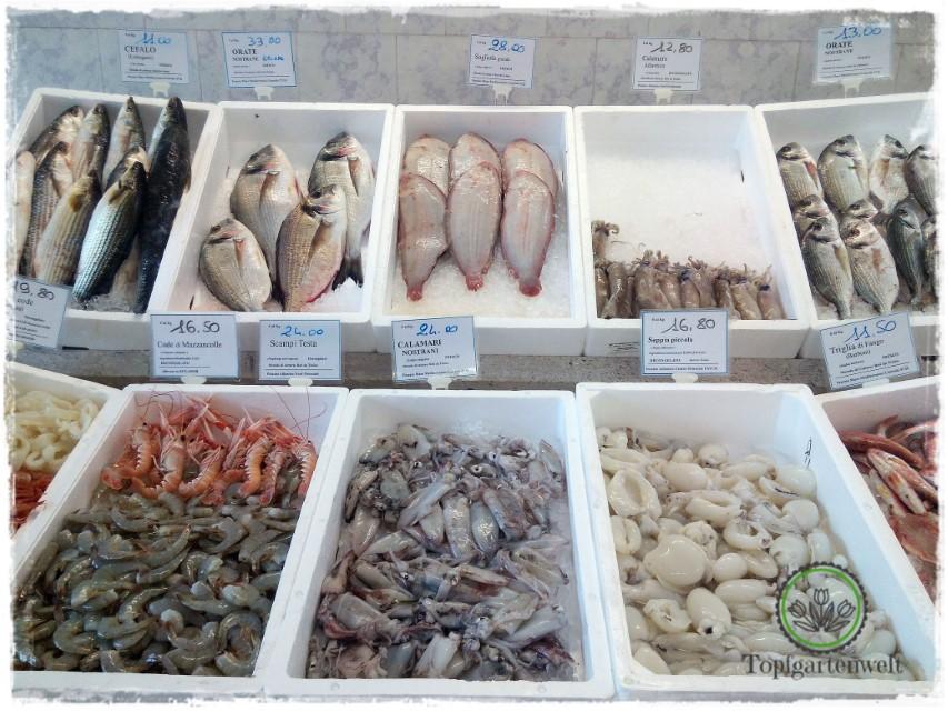 Fische und Meeresfrüchte am Markt von Portogruaro - Gartenblog Topfgartenwelt