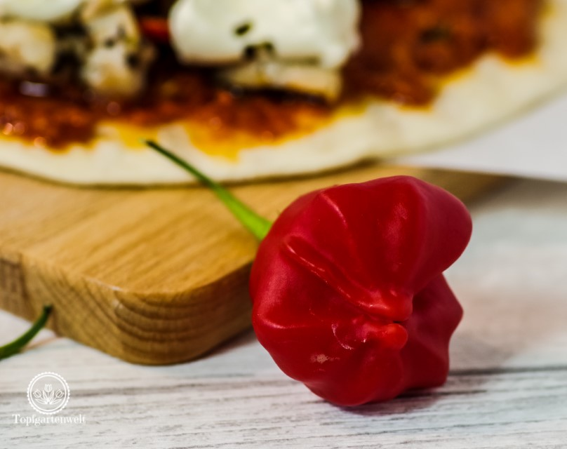 Glockenchili zum Würzen für Piadine mit Hähnchen und Pesto Rosso - Foodblog Topfgartenwelt
