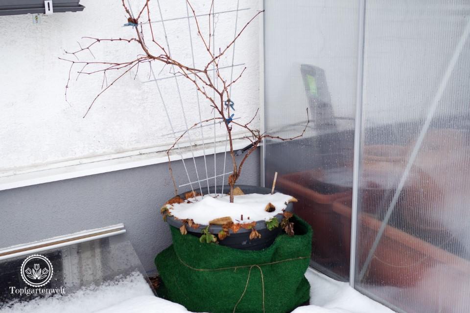Wie oft muss man Topfpflanzen im Winter gießen?!