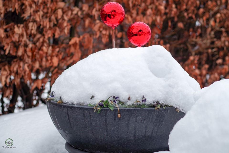 Muss man Topfpflanzen im Winter gießen? - Gartenblog Topfgartenwelt