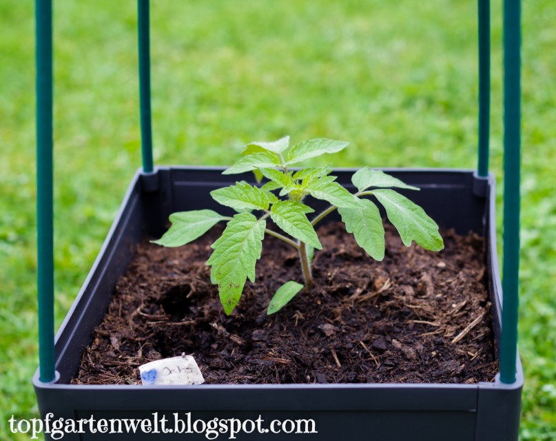 Tomaten Pflanztopf   Wasserspeicher   Balkon   Terrasse   Rankturm - Gartenblog Topfgartenwelt