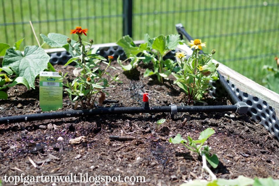 Gardena Micro Drip Flächendüsen im Hochbeet verlegt - Gartenblog Topfgartenwelt