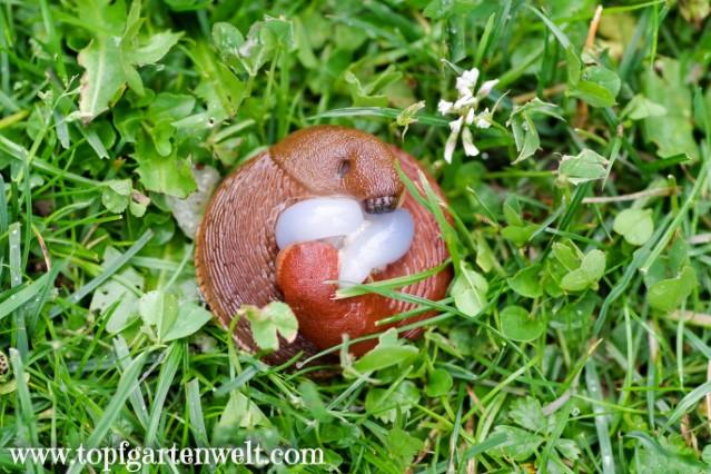 Erfahrung mit SchneckeX: Was hilft wirklich gegen Schnecken im Garten?