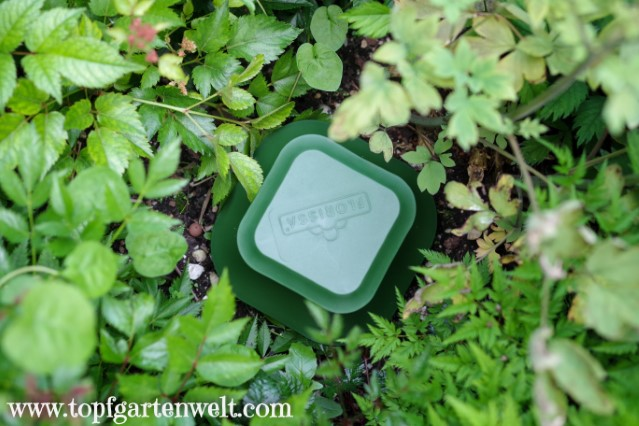 Schneckenfalle im Einsatz - Gartenblog Topfgartenwelt