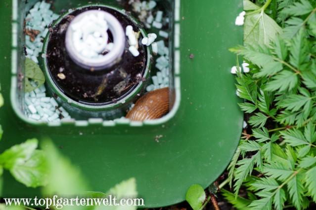 Wirksamkeit von SchneckeX im Garten - Gartenblog Topfgartenwelt