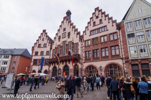 Der Römer - das Rathaus von Frankfurt - Blog Topfgartenwelt