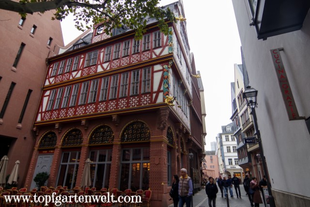 Kaffeehaus zur Goldenen Waage im Altstadtviertel - Blog Topfgartenwelt