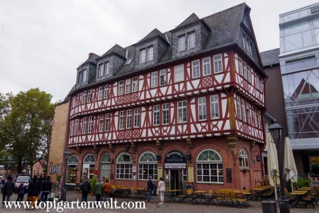 Haus Wertheim - das älteste Fachwerkhaus in Frankfurt - Blog Topfgartenwelt