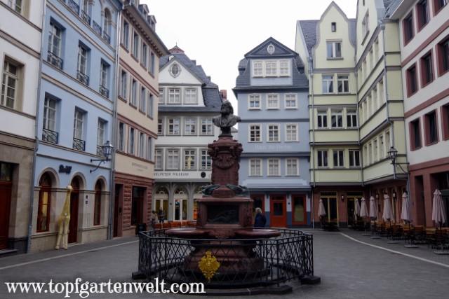 Stolze-Platz und im Hintergrund das Struwwelpetermuseum - Blog Topfgartenwelt
