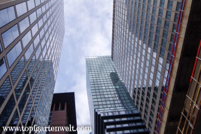 Blick zu den Wolkenkratzern in Frankfurt in Main - Blog Topfgartenwelt