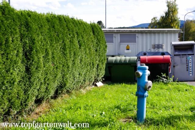 Thujenhecke als Sichtschutz zur Müllinsel - Gartenblog Topfgartenwelt