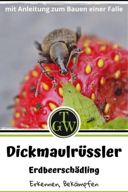 Bekämpfung gefurchter Dickmaulrüssler im Garten - Gartenblog Topfgartenwelt #gefurchterdickmaulrüssler #dickmaulrüssler #dickmaulrüsslerfallenselberbasteln #diy #schädlingbekämpfung #erdbeerschädling #erdbeeren
