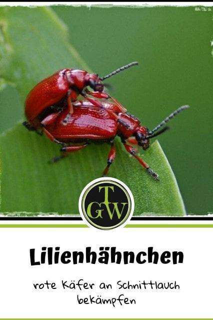Lilienhähnchen - rote Käfer an Schnittlauch und Lilien - bekämpfen - Gartenblog Topfgartenwelt